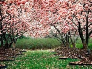 astenia primaveral2