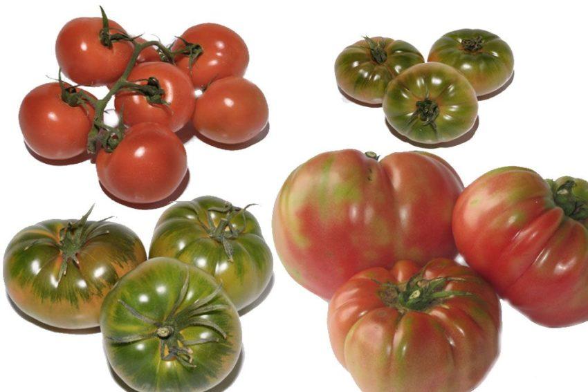 Selección de tomates gourmet