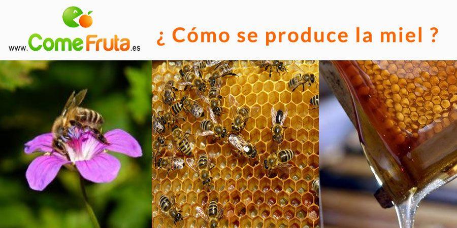 cómo se produce la miel