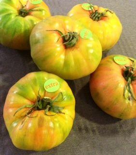 5 tomates