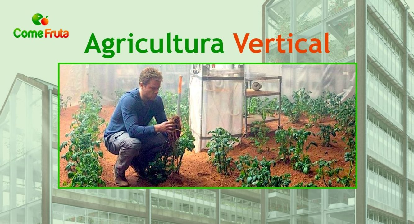 vertical agricultura agricultura indoor