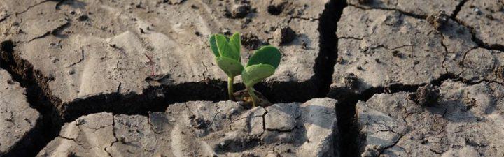 cómo funciona la agricultura ecológica