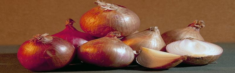 conservar cebolla
