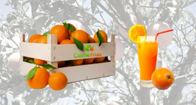 comprar naranjas comefruta