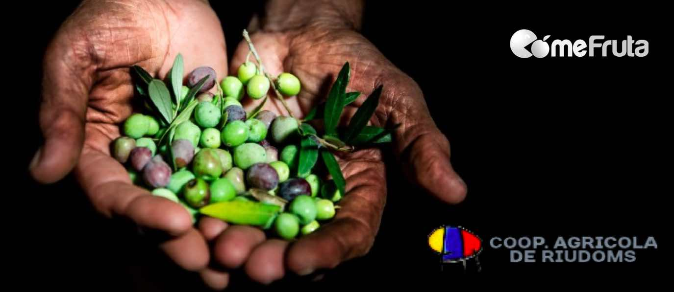 cooperativa productor aceite de oliva virgen extra comefruta