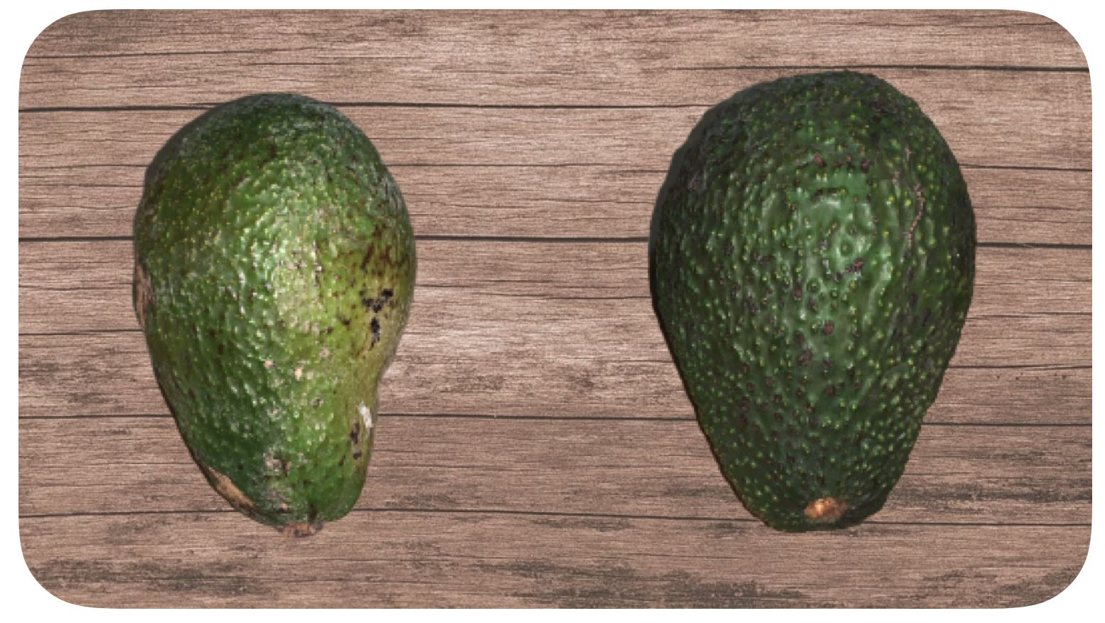 diferencia aguacate hass y mediano
