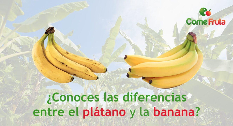 plátano vs. banana comefruta