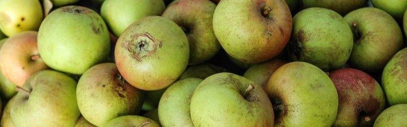 ¿Fruta ecológica para oficinas?