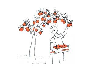 Fruta-espera-en-el-arbol-1