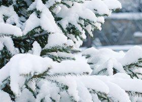 frutas de temporada mes a mes: frutas de invierno