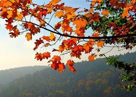 frutas de temporada mes a mes: frutas de otoño