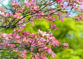 frutas de temporada mes a mes: frutas de primavera