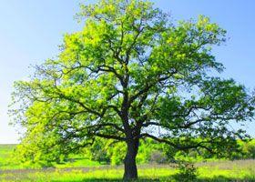 ecología o ecologismo