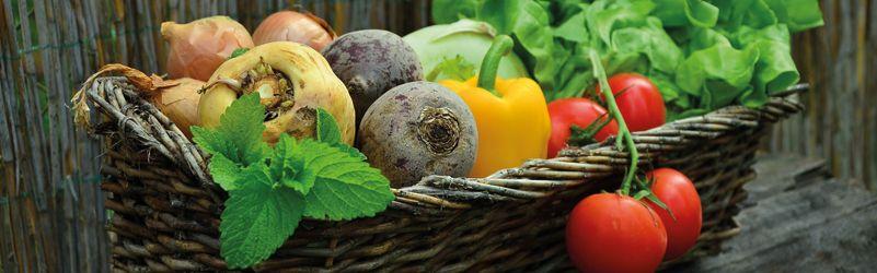guía para conservar verduras