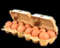 huevos camperos gallinas libres