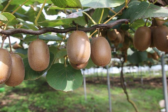 Las propiedades del kiwi más relevantes