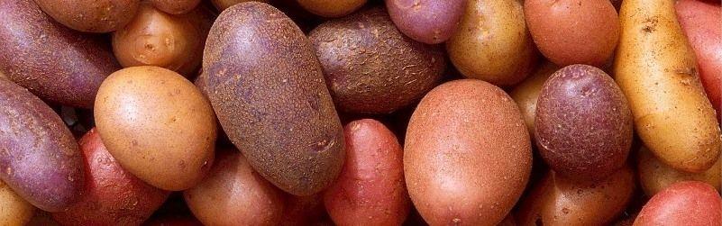 3 excelentes tortillas de patata