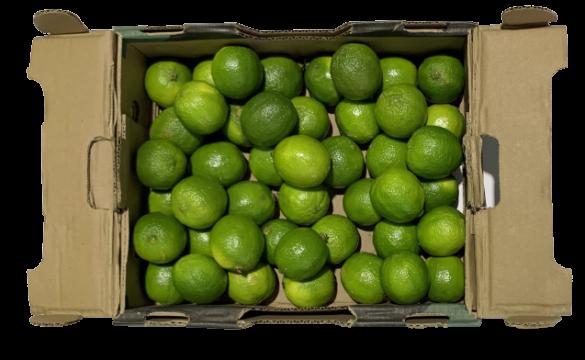 venta fruta al por mayor