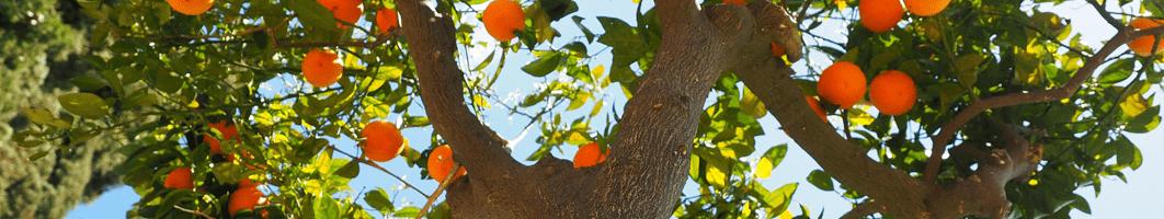 Conoce a Basi, nuestro productor de cítricos de Valencia y Murcia