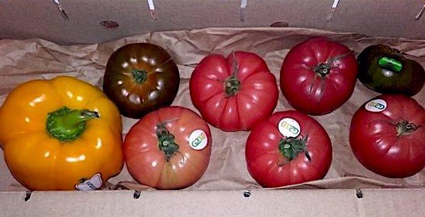 opinión tomate comefruta 1