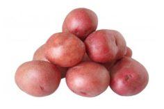 patata para freír