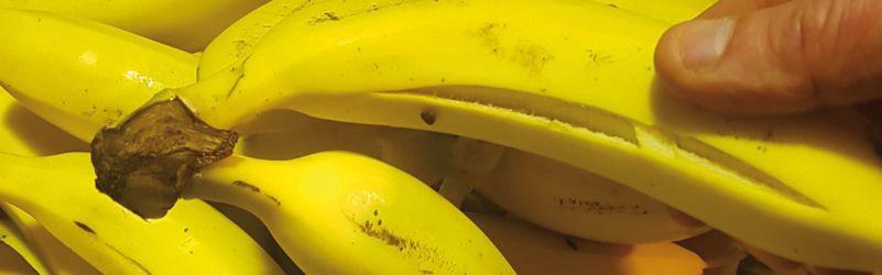 plátanos rajados