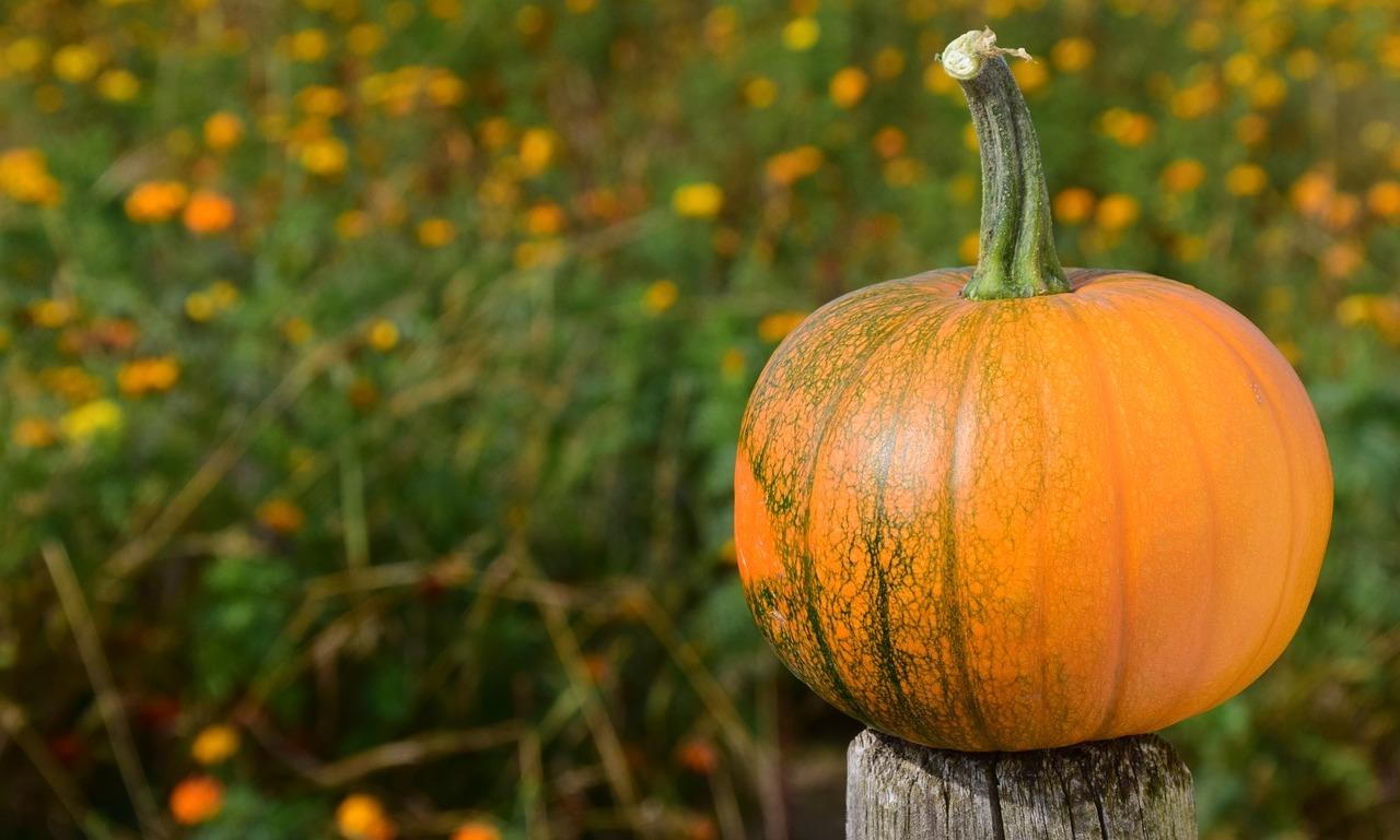 pumpkin 1710278 1280