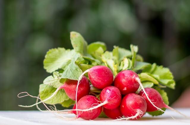 rábanitos, verduras de primavera