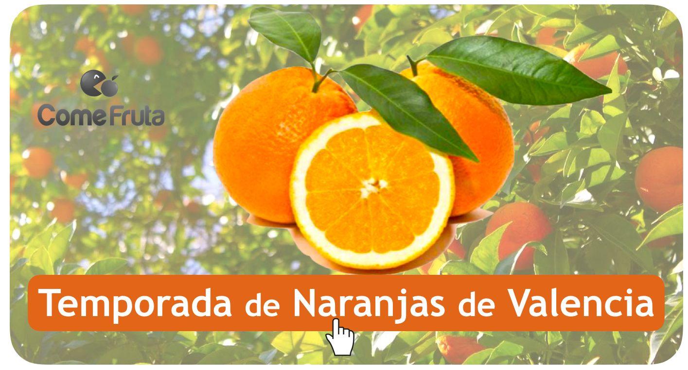 temporada de naranjas de valencia