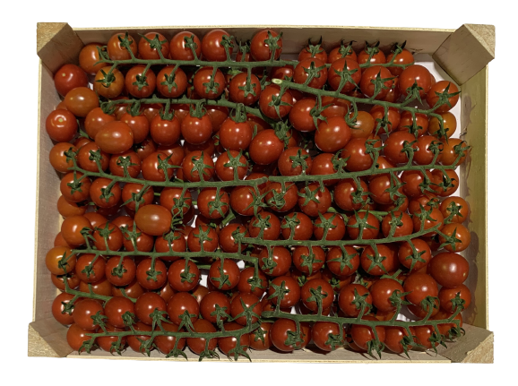 venta mayorista fruta