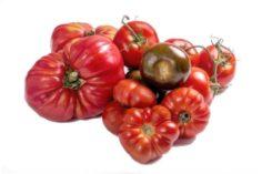tomates temporada