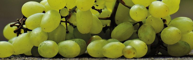 uvas sin pepitas